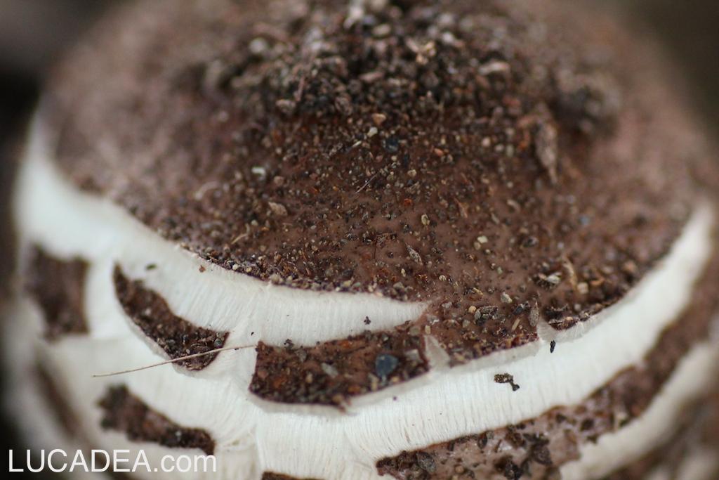 Funghi nelle aiuole (foto)