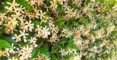 Muro di fiori bianchi (foto)
