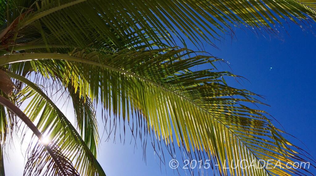Sole tra le palme in una spiaggia dei Caraibi