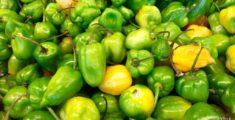Ancora peperoncini messicani (foto)