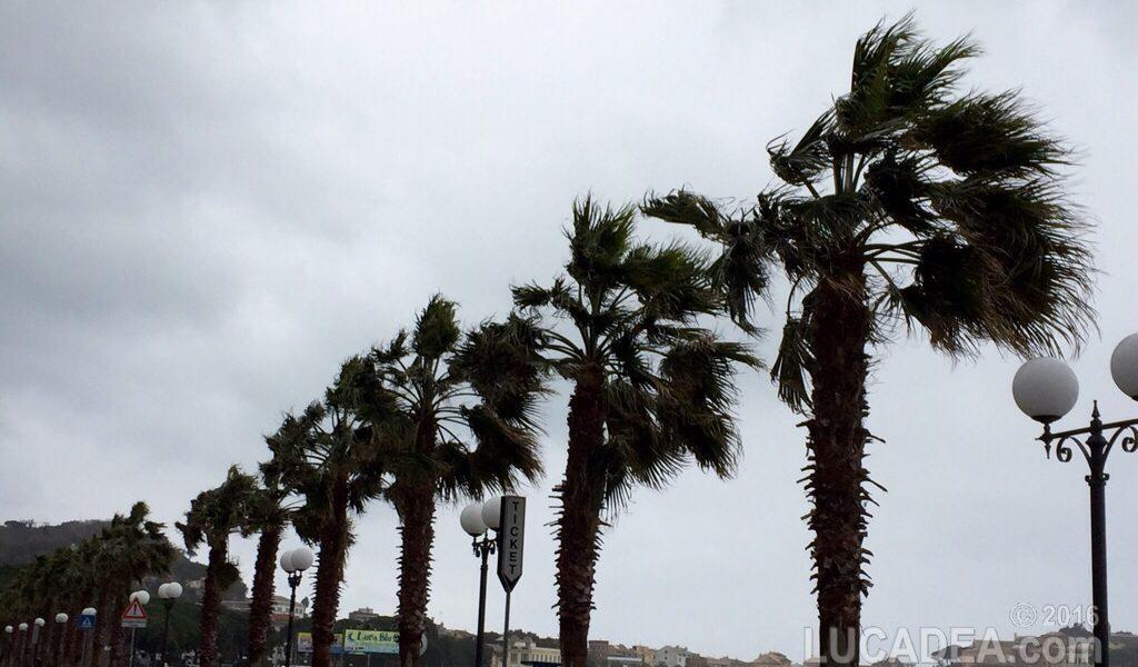 Palme sferzate dal vento