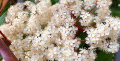 Fiorellini di primavera