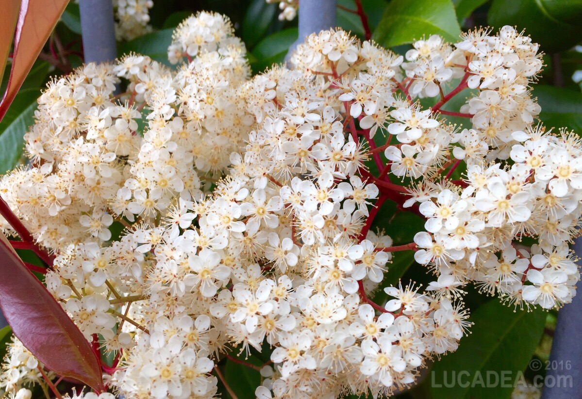 Fiorellini bianchi