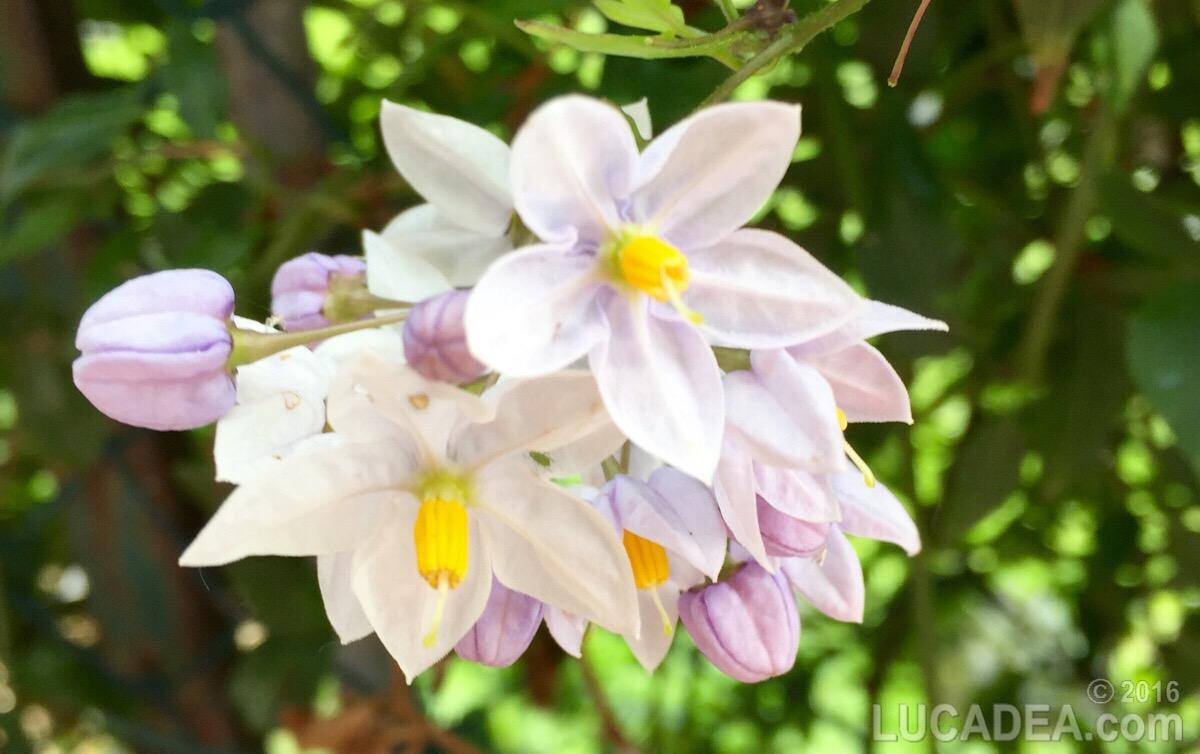 Fiore (foto)