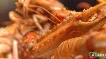Chela di un crostaceo fotografata in maniera ravvicinata (foto)