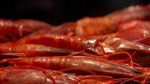 Gamberi rossi (foto)