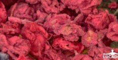 Fiori cristallizzati: unire la bellezza dei fiori allo zucchero