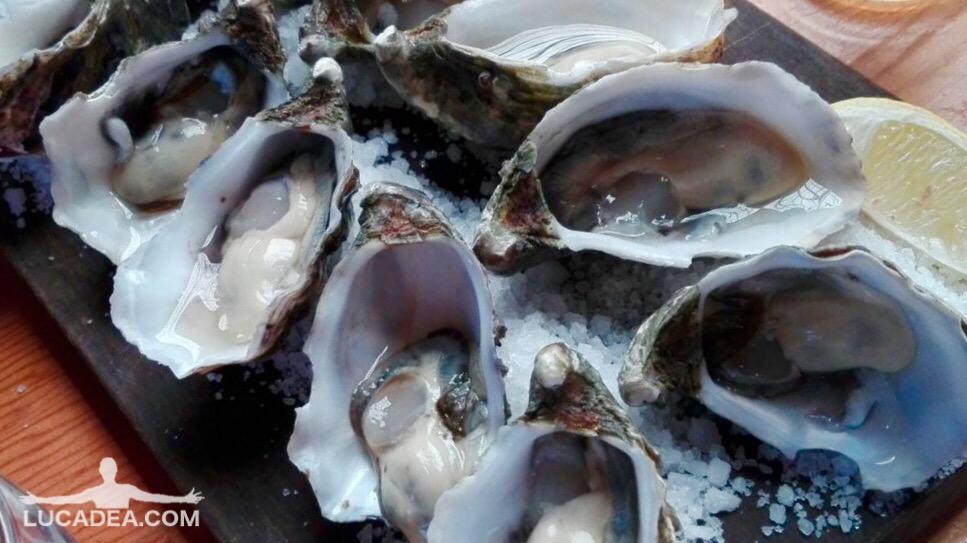 Ostriche e sale: un bel vassoio di molluschi prelibati (foto)