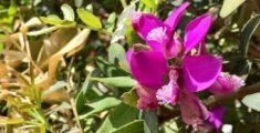 Ancora fiori rosa (foto)