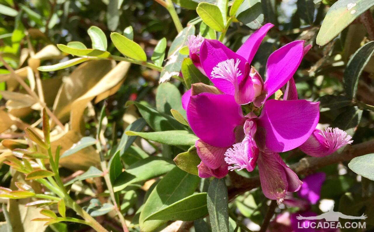 Ancora fiori rosa