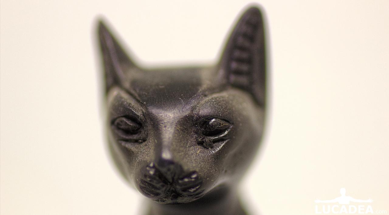 gatto egiziano testa