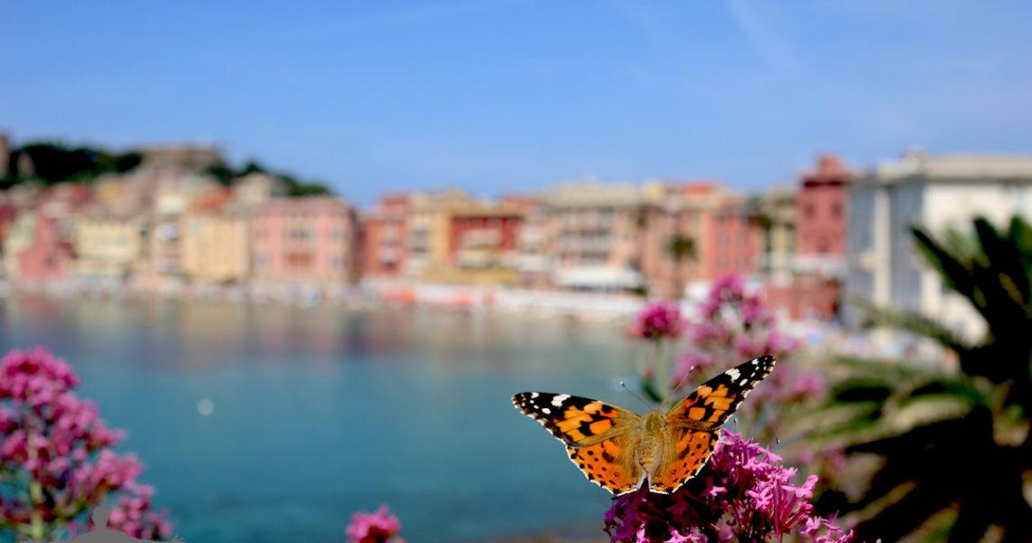 Farfalla in Baia