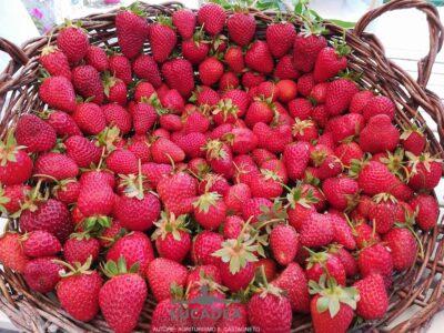 Gerla di fragole