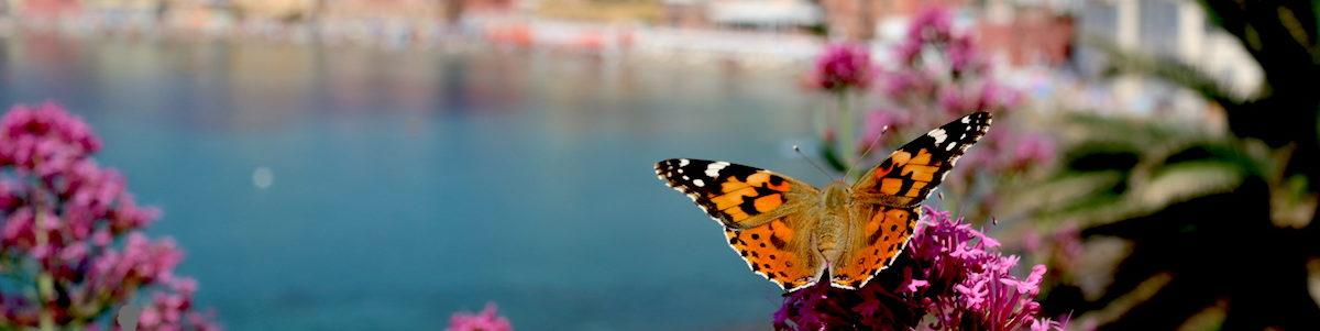 cropped-Farfalla-in-Baia-01.jpg
