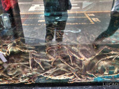Granchi ad Hong Kong