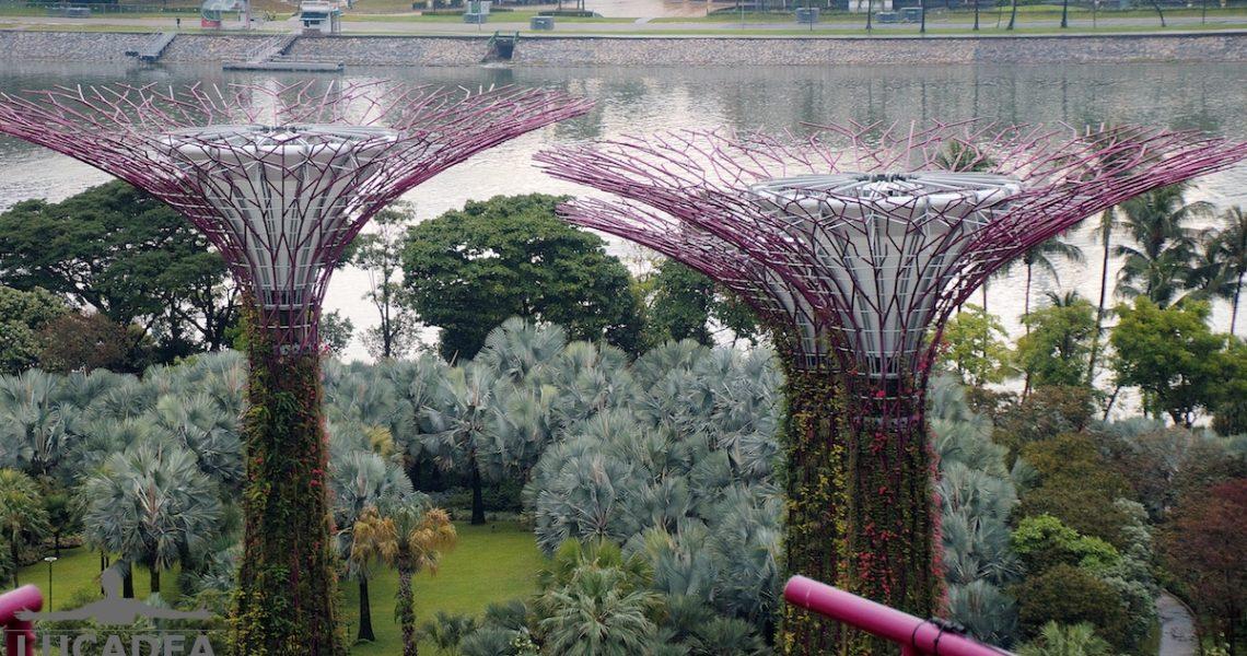 Supertree a Singapore