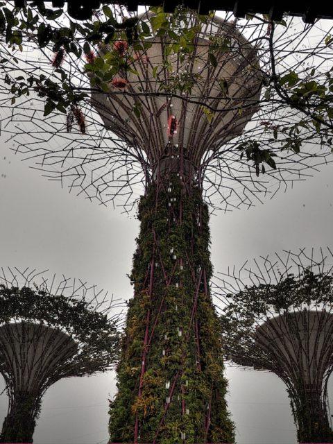 I super alberi di Singapore