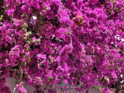 Fiori su palazzo a Ibiza