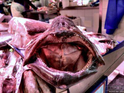 La bocca di un pesce