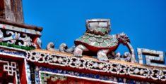 Tartaruga sul tetto a Hue