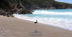 Pellicano sulla spiaggia di Lambert Bay