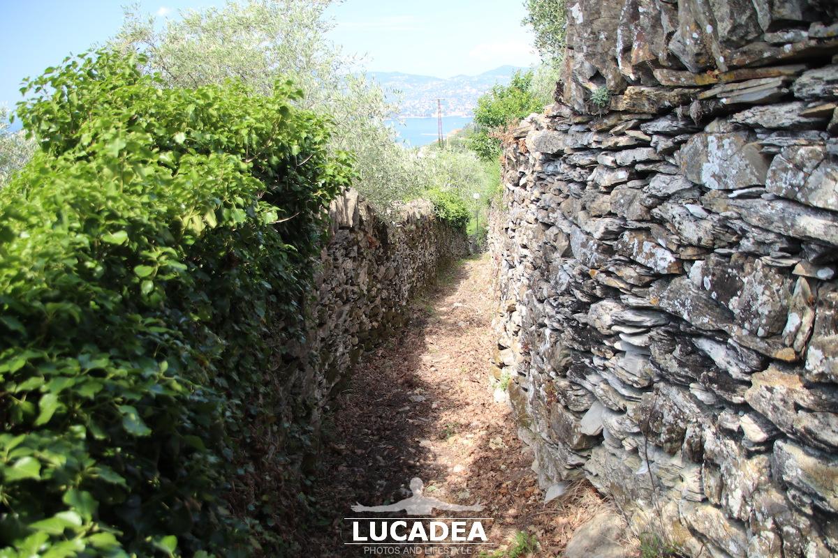 Il sentiero per il Santuario di Montallegro a Rapallo