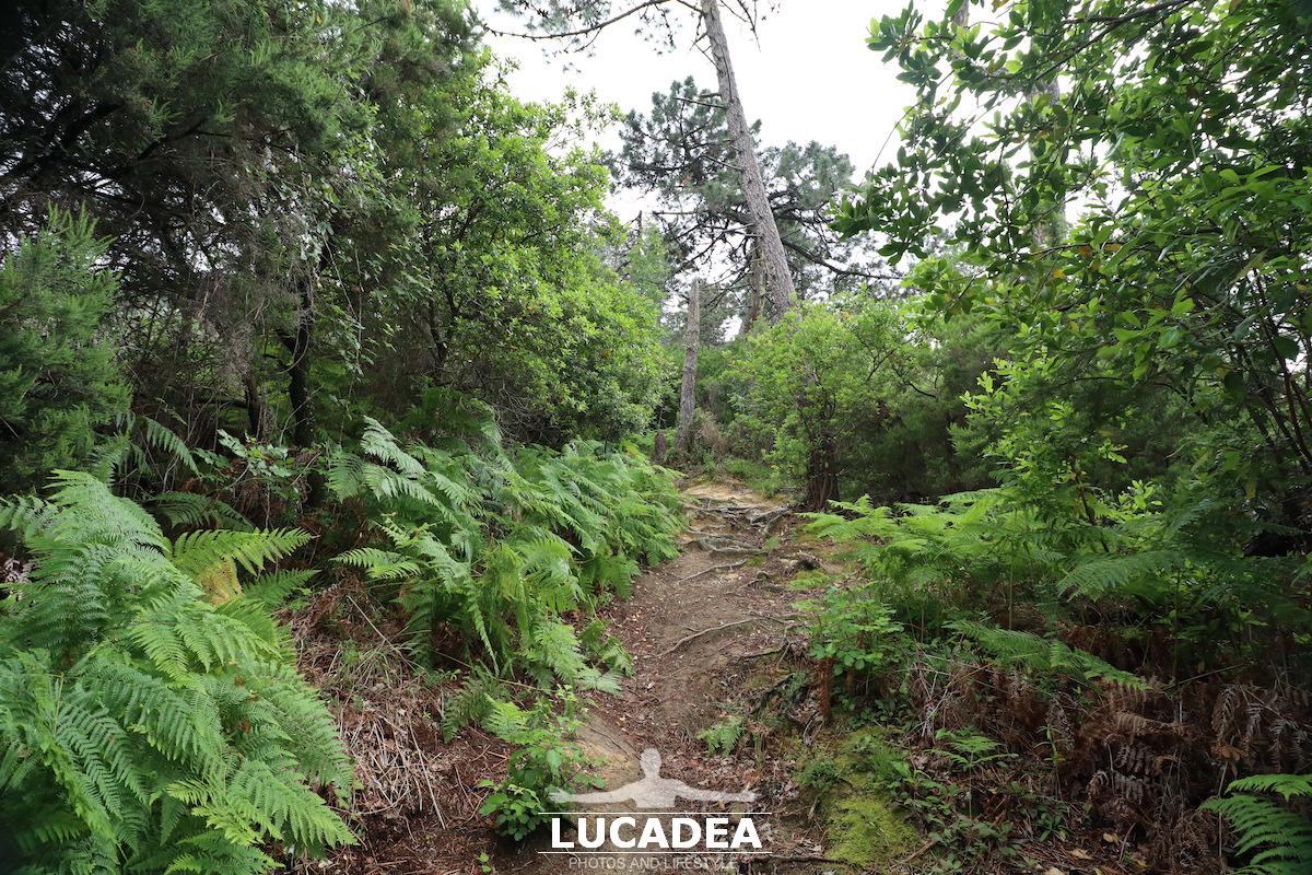 Sentiero per il Monte Castellaro da Via Val di Canepa