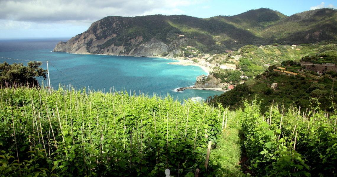 Viti sospese sopra a Monterosso