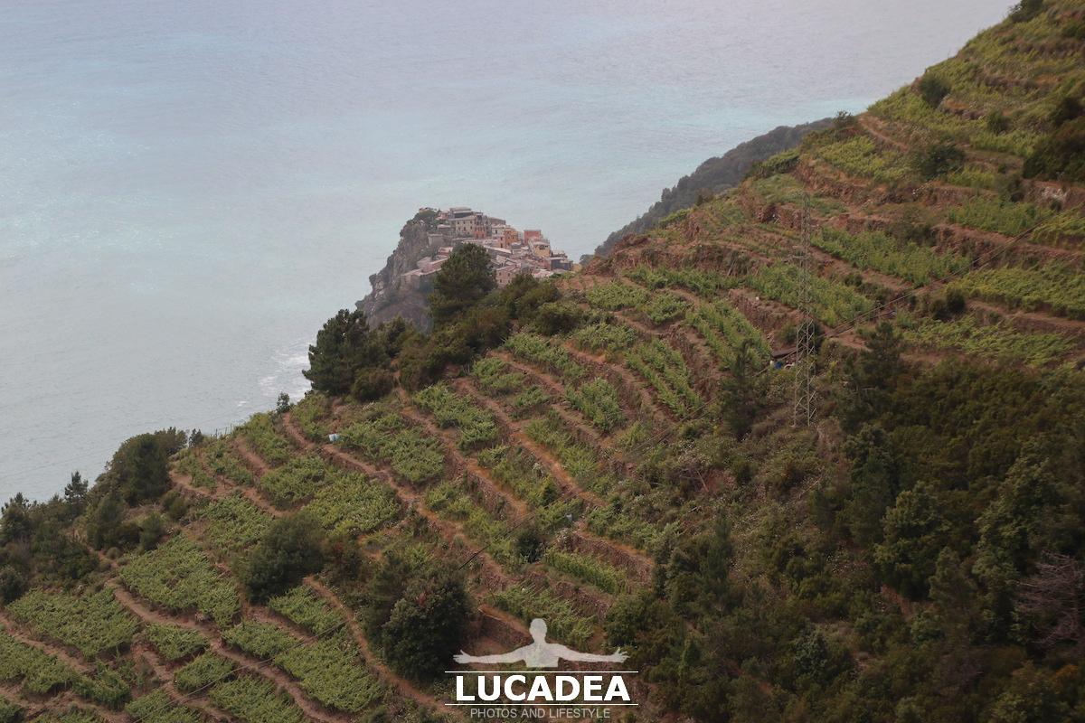 Terrazze sopra a Corniglia nelle Cinque Terre