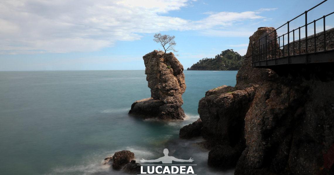 L'albero su scoglio tra Santa e Portofino