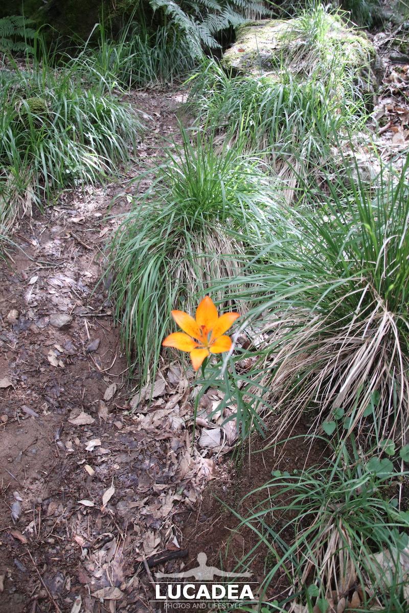 Un fiore nel bosco
