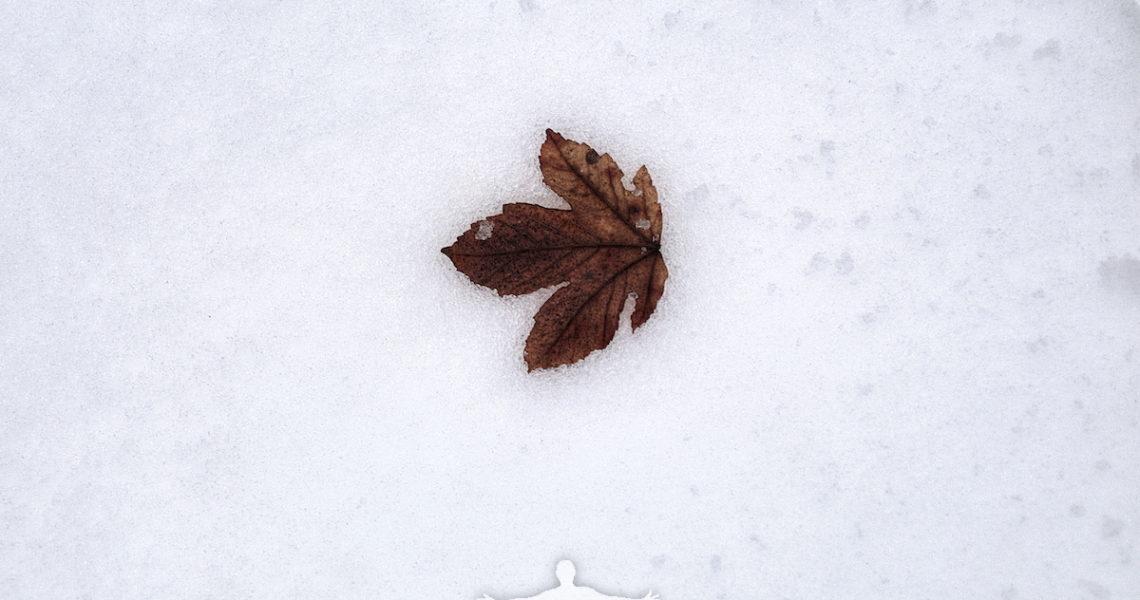 Una foglia sulla neve