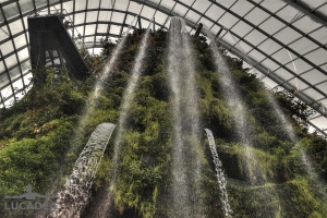 Cloud Forest 01
