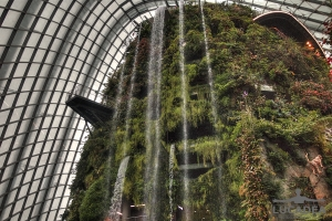 Cloud Forest 02