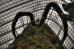 Cloud Forest 03