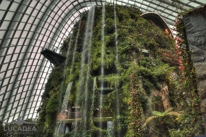 Cloud Forest 05