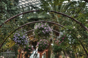 Flower Dome 03