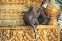 scimmiette Tempio Wat Leu 01
