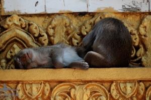 scimmiette Tempio Wat Leu 02