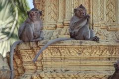 scimmiette Tempio Wat Leu 03